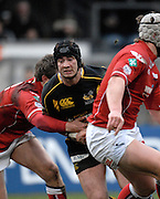 Wycombe, GREAT BRITAIN, Wasps, Danny CIPRIANI, slips between two Llanelli's players', during the Heineken Cup game Wasps vs Llanelli Scarlets, at Adams Park Stadium, Bucks, 13.01.2008 [Photo, Peter Spurrier/Intersport-images]