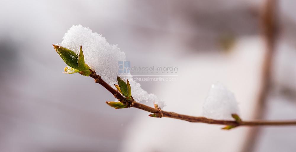 spring snow at york street