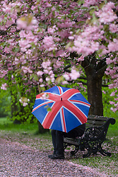 © Licensed to London News Pictures. 30/04/2018. London, UK. A person with a union jack umbrella shelters on a bench under cherry blossom trees during wet and windy weather in Greenwich Park in London. The capital has been experiencing heavy rain and windy weather today. Photo credit: Vickie Flores/LNP
