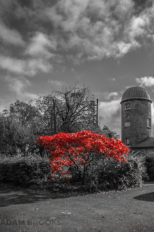 The Maple tree at the front of Armagh Observatory. This tree only turns this dramatic shade of red for a couple of weeks in October. I'd been wanting to try out this colour picking technique with this tree for a while and on the day the weather obliged with sun for some good shadows and some dramatic clouds as a backdrop