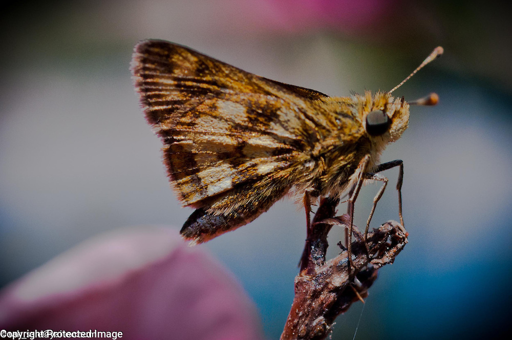 Small moth keeping lookout on a rose stem.