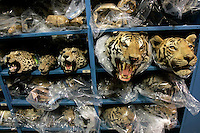 A collection of cat rugs on the sheves at the U.S. Fish and Wildlife Service Wildlife Property Repository with (L-R) a leopard, a clouded leopard, a leopard and two tigers in Commerce City, Colorado March 22, 2007. The Repository holds thousands of illegal wildlife trade artifacts confiscated at ports of entry to the United States. REUTERS/Rick Wilking (UNITED STATES)