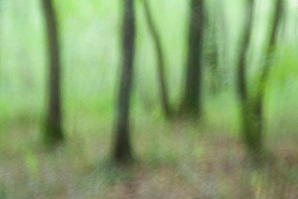 Camera movement in the forest