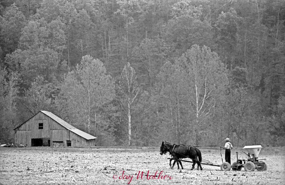 """An old-order Mennonite community was established in 1976 by several families who relocated from Pennsylvania to the small town of Liberty in Casey County, Kentucky.  The community allowed me to spend several days there in June of 1980 photographing them with the only stipulation that I couldn't """"pose"""" any photos.   They worked their fields and gardens, did other chores. The whole community went to church on Sunday using an old farmhouse as their place of worship. ..Jacob Oberholtzer spreading fertilizer on his farm."""