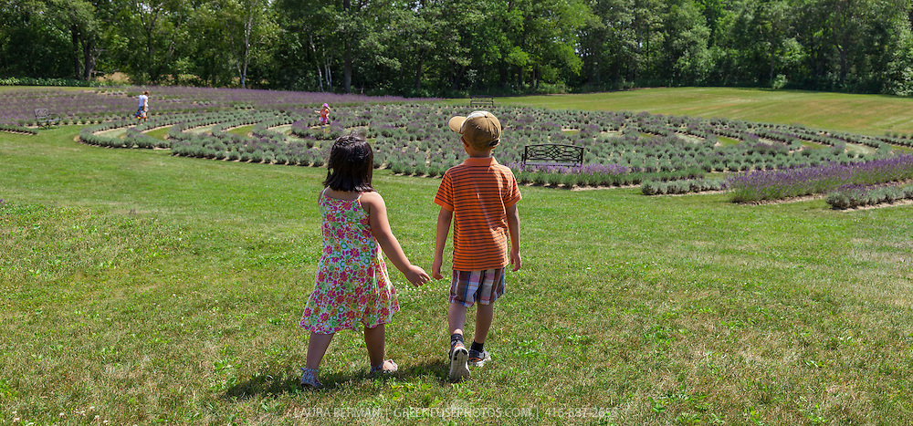 A young boy and girl holding hands in front of Laveanne Lavender's labyrinth in the background.