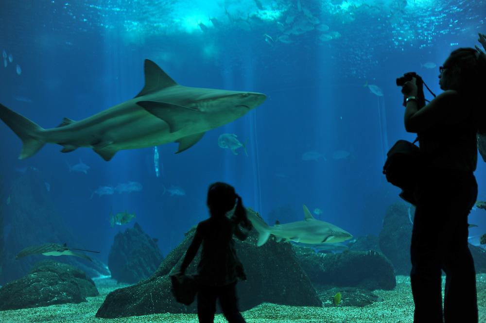 Visitors at Lisbon's Oceanarium.