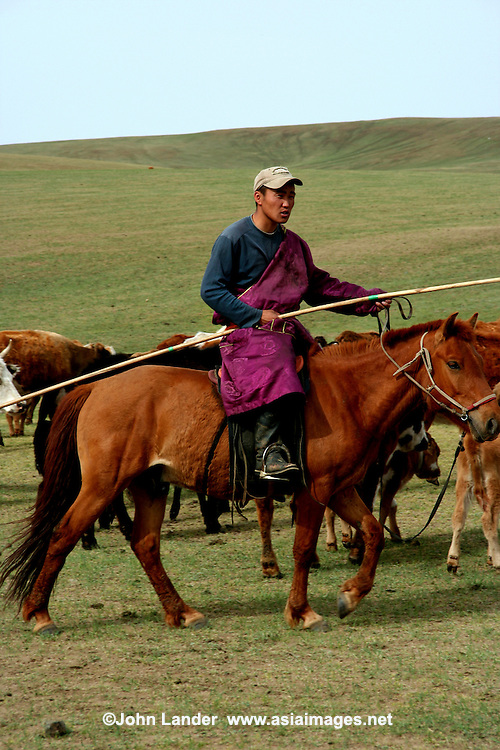 Horseman runs his flock of sheep in the steppes outside of Ulan Bator Mongolia - Nomadic people move from one place to another, rather than settling permanently in one location.   Nomads in Mongolia are usually of the pastoral type following seasonally available wild plants and game, moving with them in ways that avoid depleting pastures beyond their ability to recover.