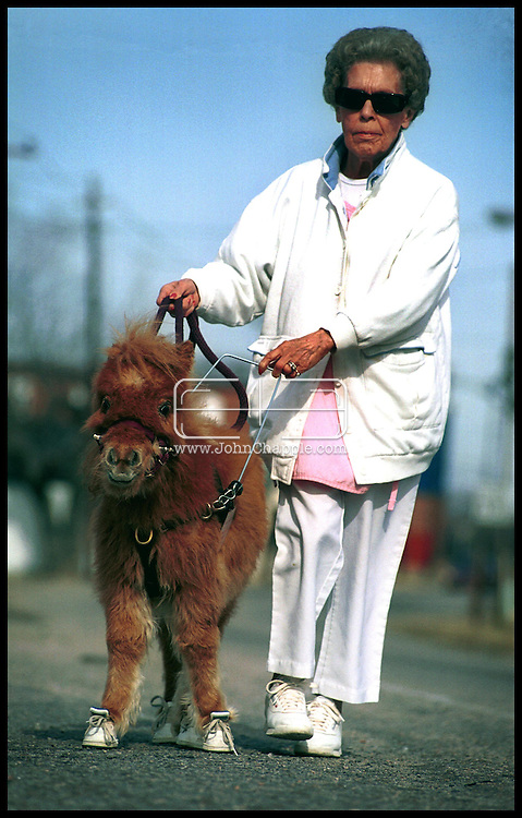 1st February 2001, Kittrell, North Carolina. Cuddles a pigmy horse, who is the first guide horse for the blind, pictured Eddie Short. <br /> <br /> Photo Copyright John Chapple / www.JohnChapple.com
