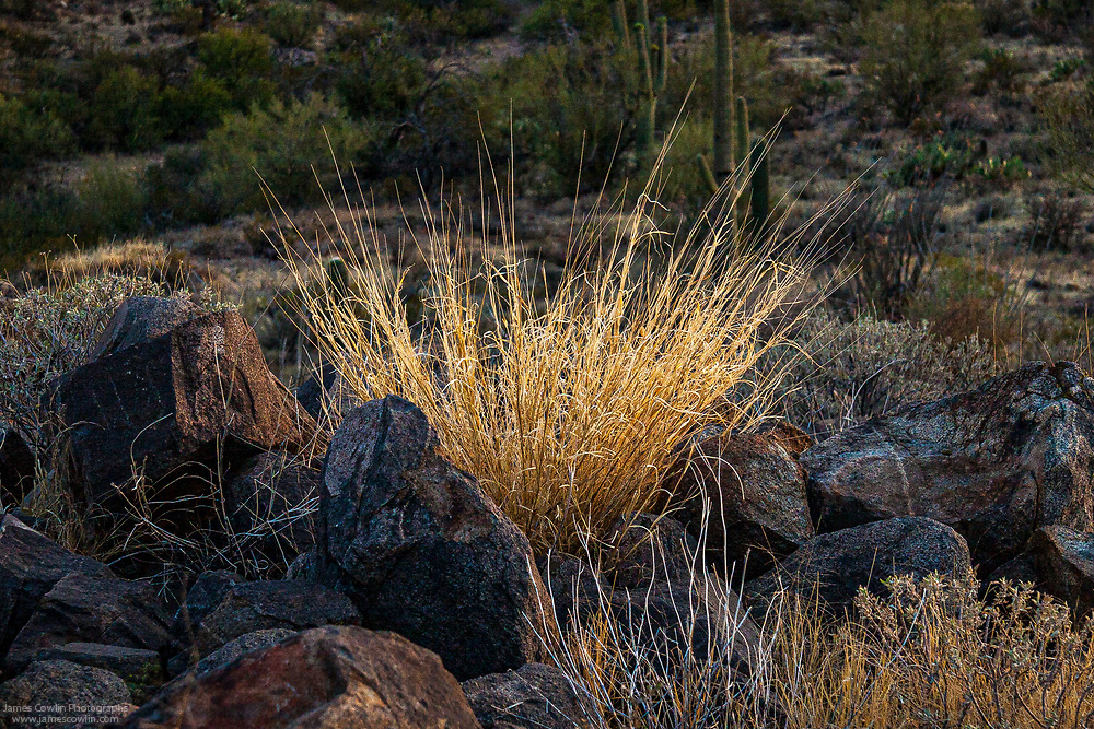 Evening light on dried grass and rocks in Saguaro Nattional Park, Arizona