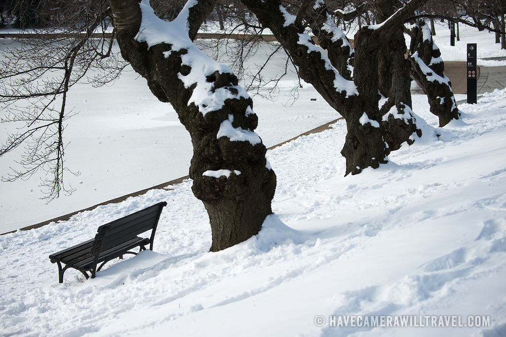 Snow covers cherry blossom trees on the banks of the Tidal Basin in Washington DC after a winter snow storm.