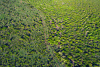 Aerial view of Zululand bushveld and trees, Phinda private Game Reserve, KwaZulu Natal, South Africa