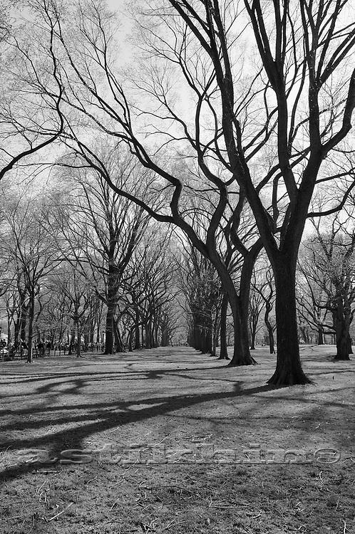 Warm day in park, Manhattan.