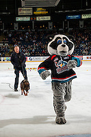 KELOWNA, CANADA - FEBRUARY 22: Rocky Racoon, the mascot of the Kelowna Rockets runs from an RCMP dog during intermission against the Edmonton Oil Kings  on February 22, 2017 at Prospera Place in Kelowna, British Columbia, Canada.  (Photo by Marissa Baecker/Shoot the Breeze)  *** Local Caption ***