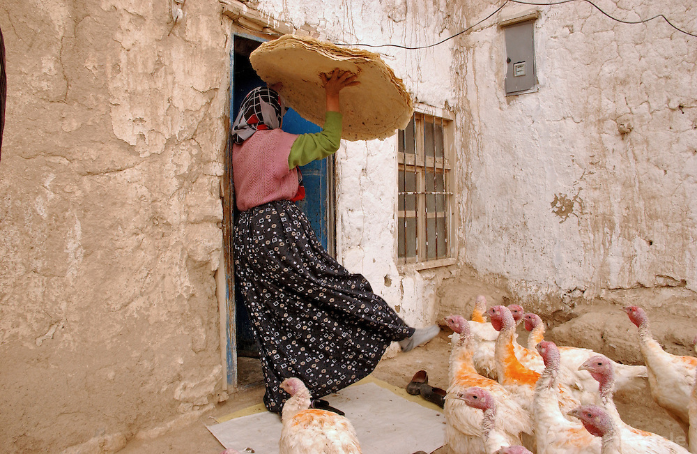 Ali Ipak 's wife Ayse brings flat bread into her home as turkeys attempt to get inside December 12, 2005 in central Turkey, Konya in Kutoren district, about 400 kilometers from Ankara.  (Ami Vitale)