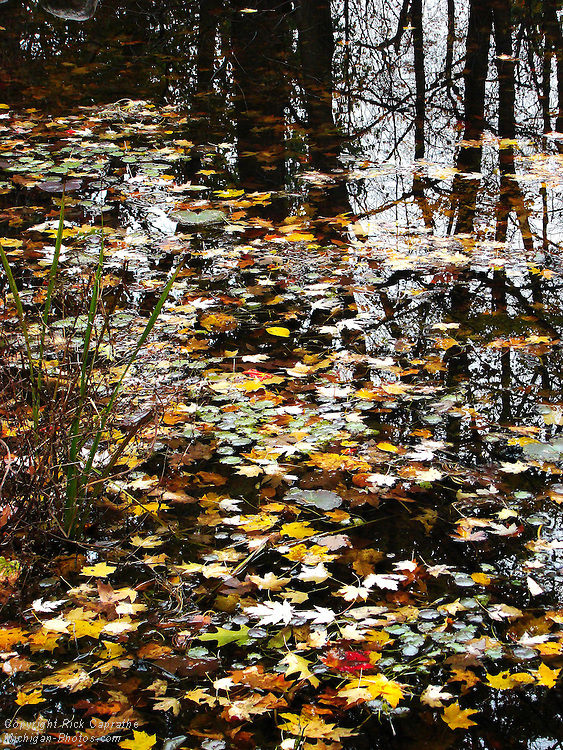 Autumn Leaves on Pond with Reflections