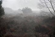 Foggy weather on heathland Shottisham, Suffolk, England