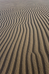 Patterns in dune, Monahans Sandhills State Park, Texas, USA.