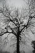 Trees-Silhouette-Gloomy