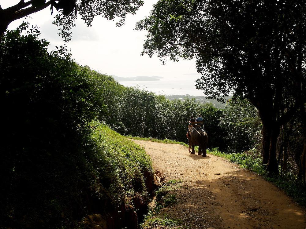 Elephant ride in Phuket, Thailand