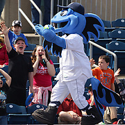 B.B. the Bluefish mascot entertains the crowd during the Bridgeport Bluefish V York Revolution, Atlantic League, Minor League ballgame at Harbor Yard Ballpark, Bridgeport, Connecticut, USA. Photo Tim Clayton