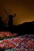 Queen Wilhelmina Tulip Garden and the Dutch Windmill