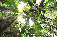 Caribbean lowland rainforest in La Selva, Sarapiqui, Costa Rica.<br />