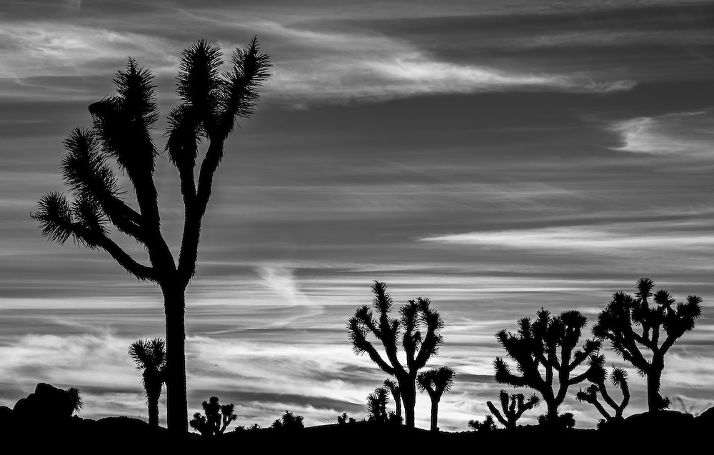 Photos of sunrise in Joshua Tree National Park