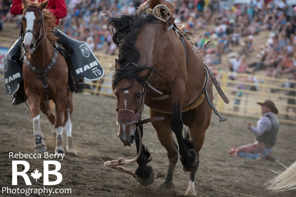 Saddle bronc at the Mighty Fraser Pro Rodeo during Agrifair in Abbotsford B.C. July 31 -August 2, 2015.
