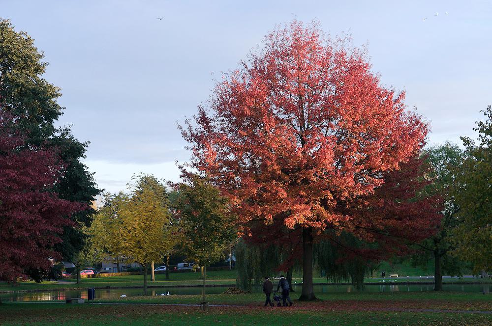 Nederland, Den Bosch, 20101031..Parkje bij Forth Orthen in Den Bosch..Boom kleurt in de late avondzon prachtig rood op. Twee oude mannen, waarvan er éen met een rollator, lopen door het park in de schaduw van de boom..Natuur in de stad.