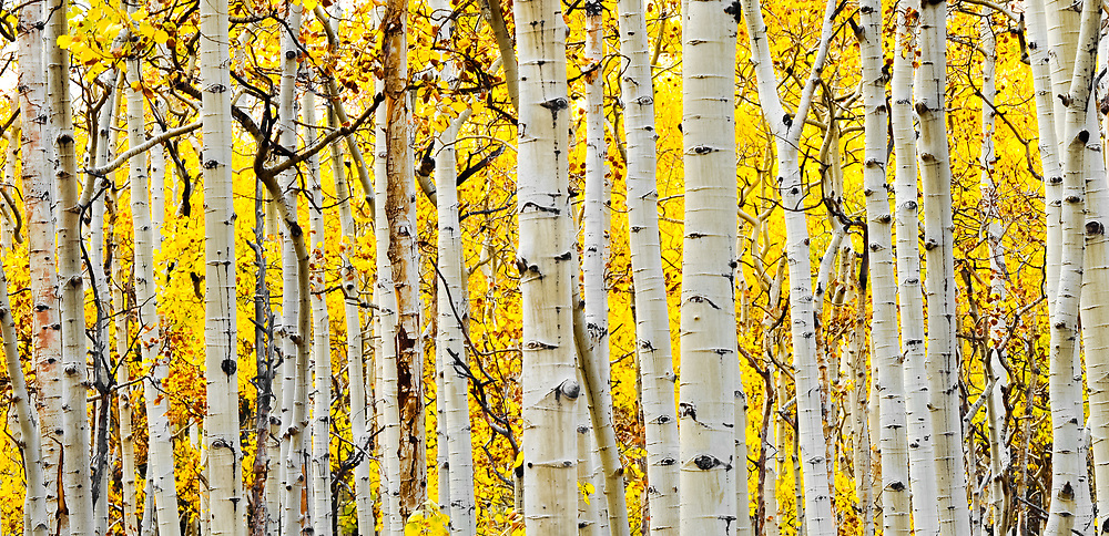 I took this shot in one of my favorite fall locations in the Kenosha Pass area in Colorado.<br />