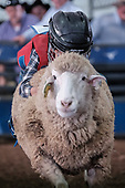 March 18, 2017 Mutton Bustin'