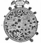 German astronomer Christopher Scheiner's (1573-1650) illustration of  the surface of the sun, 1635. Engraving