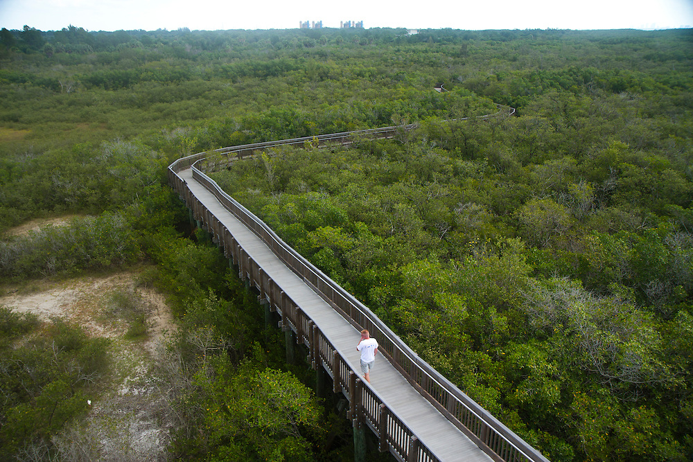 The view looking down from the observation tower at a boardwalk trail at Weedon Island Preserve.Nestled between the thriving cities of Tampa and St. Petersburg, Weedon Island Preserve offers a fun and easy daytrip for fishing, hiking and paddling. 2 mile and 4 mile paddling trails meander through mangrove tunnels, over seagrass flats and around mangrove islands. The preserve also offers ample wildlife viewing on hiking trails and from an observation tower. .Photo by James Branaman