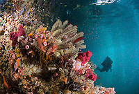 Vibrant Reef Shallows and Diver