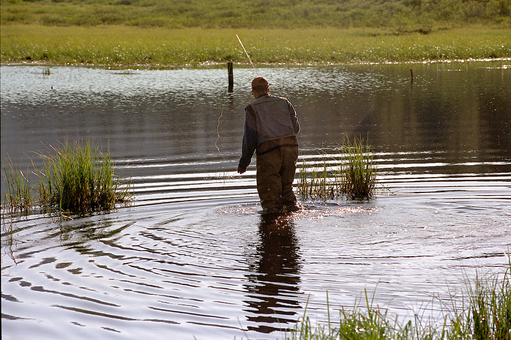 Afisher man wades into a beaver pond in the Colorado Rocky Mountains.