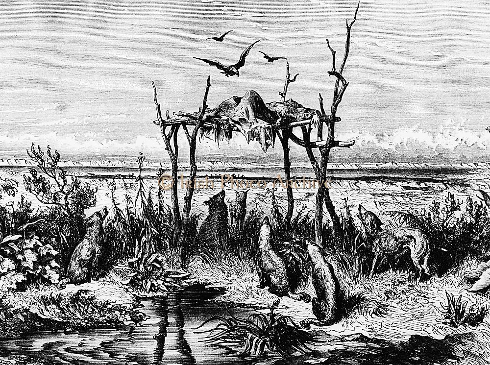 Burial customs: Body left exposed on raised wooden platform: North American Indians in region of Saskatchewan river. Wood engraving c1870.