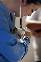"MCDERMITT, NV - AUG 16:  ""Missie"" gets a checked out by student Jessica Girard during a clinic sponsored by the Humane Society of the United States August 16, 2009 in McDermitt Nevada.  (Photograph by David Paul Morris)"