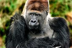 Giveskud Zoo