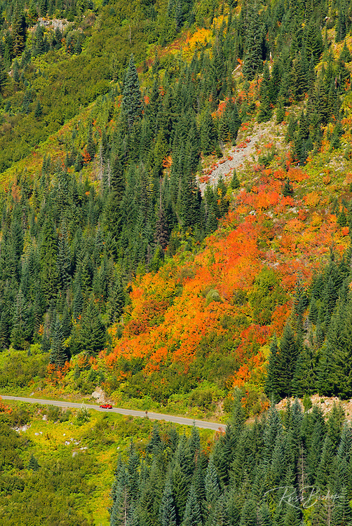 Fall color in Stevens Canyon, Mount Rainier National Park, Washington