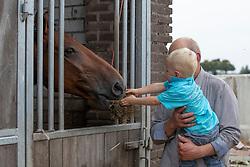 Fokkerij Gijsbers  <br /> Stal Gijsbers - Loosbroek 2018<br /> © Hippo Foto - Dirk Caremans<br /> 28/08/2018