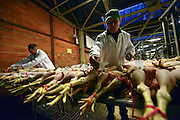 © Licensed to London News Pictures. 21/12/2012. Reading, UK Workers tag the birds with numbers before the auction begins. Auction house Thimbleby and Shorland holds its annual traditional christmas poultry sale today 21st December 2012 in Reading, Berkshire. Over 500 lots of fresh turkeys, chickens, geese and duck, all oven ready and rough plucked were available for sale. The general public in the UK are reported  to spend over 300 million GBP on turkey over the Christmas season.. Photo credit : Stephen Simpson/LNP