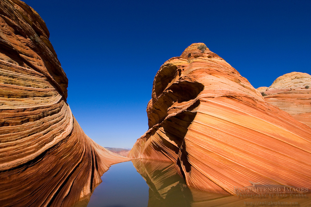 Seasonal desert pool of water below striated sandstone at The Wave, Coyote Buttes, Paria Canyon Vermilion Cliffs Wilderness, Arizona