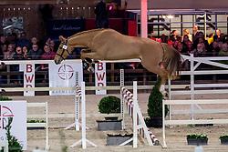091, Gancio Van't Smisveld Z<br /> BWP Hengstenkeuring -  Lier 2020<br /> © Hippo Foto - Dirk Caremans<br />  17/01/2020