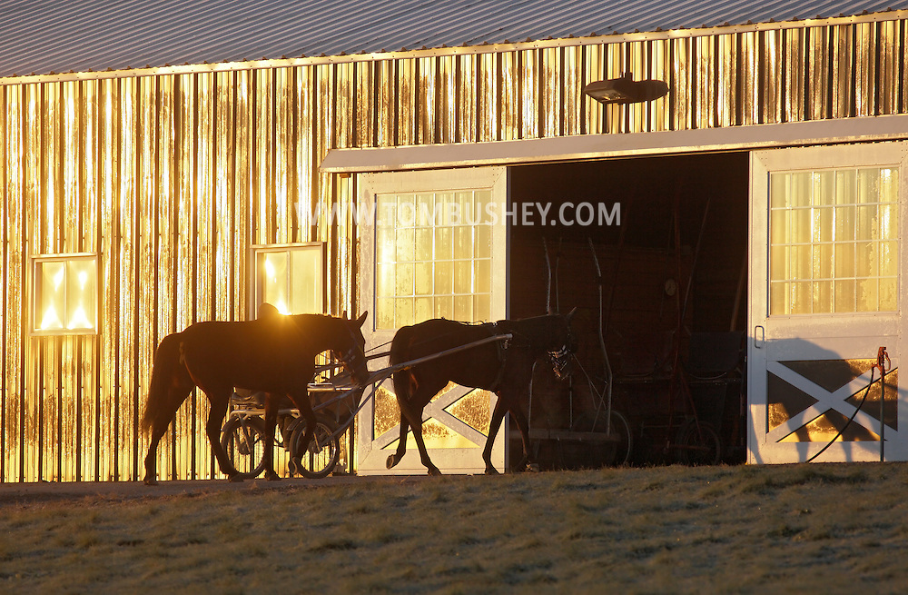 Town of Wallkill - A trainer and two harness racing horses head back to the barn after working out on a cold morning at the Mark Ford Training Center on Dec. 12, 2011.