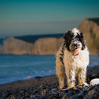 Dogs at Birling Gap