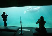 Stanley Park. Vancouver Aquarium. Beluga whales.