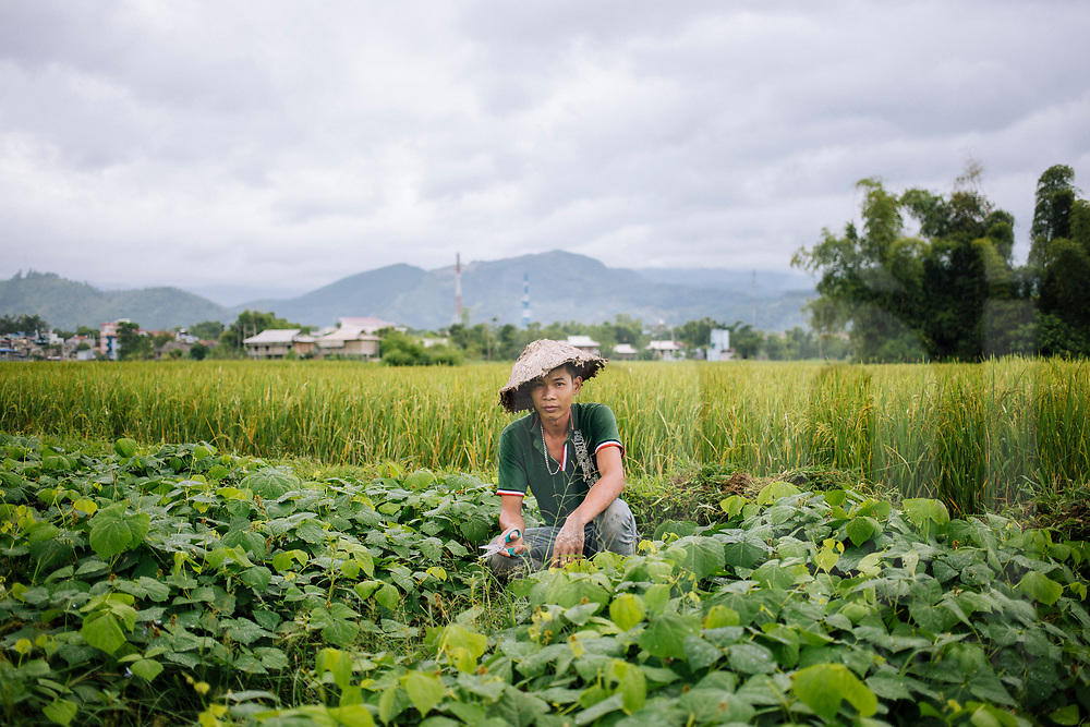 Portrait of a young vietnamese farmer working in a field, Nghia Lo, Vietnam, Southeast Asia