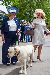 Ascot, UK. 20 June, 2019. A guide dog wearing a top hat accompanies women in fancy hats for Ladies Day at Royal Ascot.