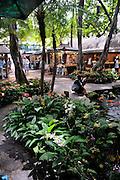 Poolside gardens in the International Market, Waikiki, Honolulu, Hawaii