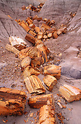 Petrified log sections in ravine on Blue Mesa, Petrified Forest National Park, Arizona